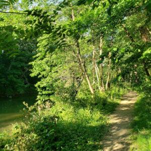 Nature Path Thumbnail
