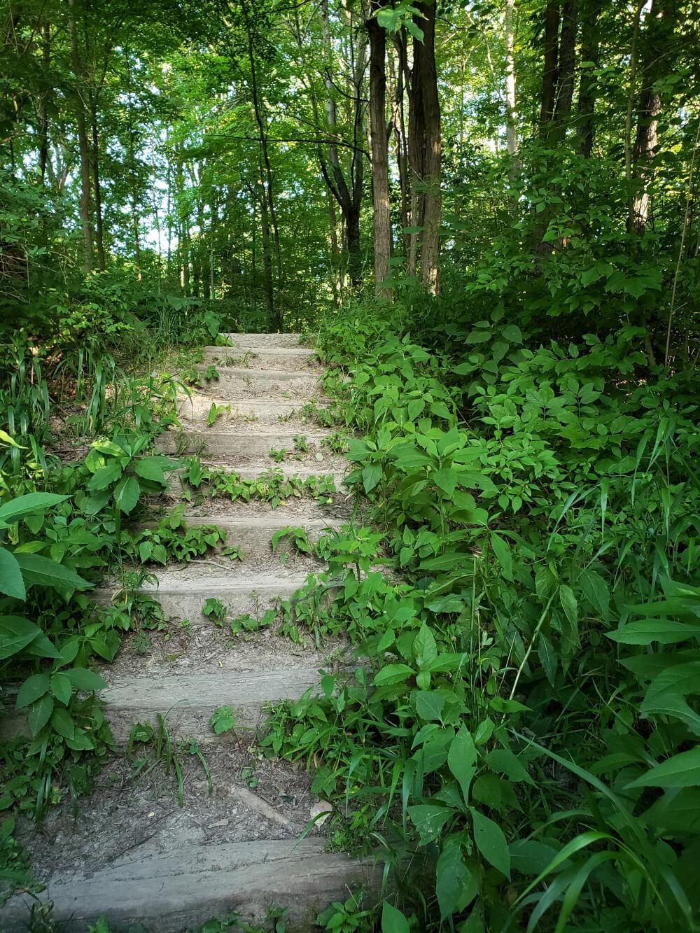 Nature Steps